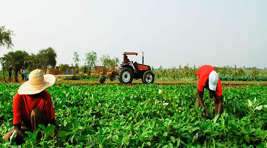 Prefeitura de Irapuã convoca produtores rurais para entrega da DIPAM-A
